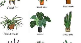 Green bedroom Plants - Best Bedroom Plants for Better Sleep